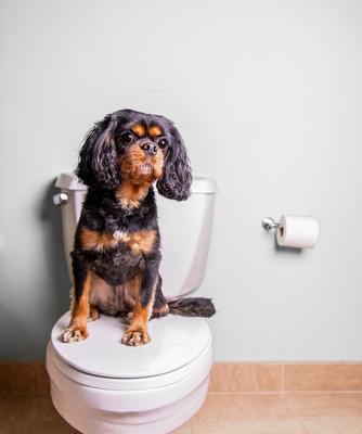Help! My Dog is A Picky Pottier!