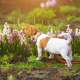 Poisonous Flowers for Dogs
