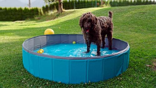 Backyard Ideas for your Dog