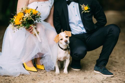 Including Dogs in Wedding Ceremonies