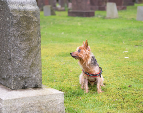 What Happens to My Pet If I Pass Away